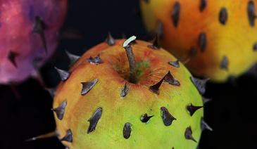 forbidden fruits marco nones 2