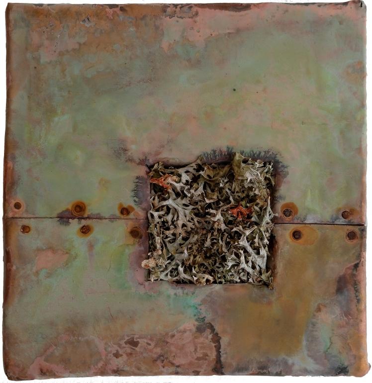 Rame e lichene di Marco Nones Foto eugenio Del Pero.jpg