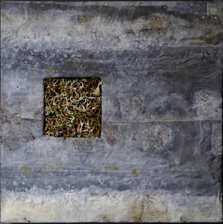 Reliquia del bosco (lichene e piombo ossidato) - foto di Eugenio del Pero